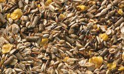 Deux rations de grains par jour